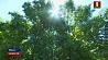 Теплая погода с небольшими дождями ожидает белорусов в ближайшие дни  Цёплае надвор'е з невялікімі дажджамі чакае беларусаў у найбліжэйшыя дні
