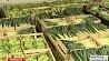 27 тонн овощей и фруктов конфисковали таможенники в Кличевском районе 27 тон гародніны і садавіны канфіскавалі мытнікі ў Клічаўскім раёне