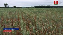 Предприятия и фермеры активно устраняют последствия засухи Прадпрыемствы і фермеры актыўна ліквідуюць наступствы засухі