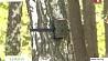 Фотоохота на любителей выбрасывать мусор в лесах развернули в лесхозах Брестской области Фотапаляванне на аматараў кідаць смецце ў лясах разгарнулі ў лясгасах Брэсцкай вобласці