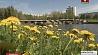 Еще более комфортная и солнечная погода ожидается в Минской области Яшчэ больш камфортнае і сонечнае надвор'е чакаецца ў Мінскай вобласці