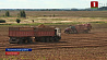 Белорусские аграрии продолжают уборку картофеля