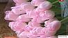 Настоятель костела в Росице выращивает цветы Настаяцель касцёла ў Росіцы вырошчвае кветкі