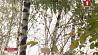В Беларуси последний день сентября будет прохладным и ясным У Беларусі апошні дзень верасня будзе халаднаватым і ясным