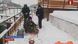 Сотрудники МЧС  вызволили косулю из водяного плена Супрацоўнікі МНС з вадзянога палону выслабанілі казулю