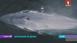 Голубой кит едва не сбил своим фонтаном беспилотник океанологов