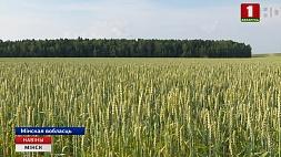 Специалисты мониторят ситуацию с урожаем во всех хозяйствах Минской области