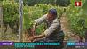 Из-за карантинных мер в сельхозсекторе не хватает рабочей силы З-за каранцінных мер у сельгассектары не хапае рабочай сілы