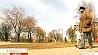 Количество многодетных семей в Минске приближается к 8 с половиной тысячам Колькасць шматдзетных сем'яў ў Мінску набліжаецца да 8 з паловай тысяч