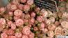 Белорусы примут участие в цветочном кубке на Мальте Беларусы возьмуць удзел у кветкавым кубку на Мальце Belarusians to take part in the flower cup in Malta