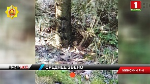 Крупного наркодилера задержали правоохранители в Минском районе