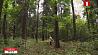 Двое грибников заблудились в лесах Минской области в эти выходные Двое грыбнікоў заблудзіліся ў лясах Мінскай вобласці ў гэтыя выхадныя