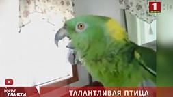 Герой Сети этой недели - очаровательный зеленый попугай