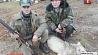 Волчицу в Калинковичском районе смогли остановить только охотники  Ваўчыцу ў Калінкавіцкім раёне змаглі спыніць толькі паляўнічыя