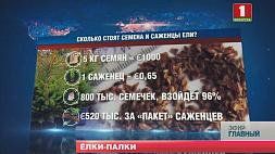 Европейская комиссия запретила поставки белорусских семян лесных деревьев и саженцев Еўрапейская камісія забараніла пастаўкі беларускага насення лясных дрэў і саджанцаў