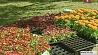 В Минске выбирают лучших городских озеленителей У Мінску выбіраюць лепшых гарадскіх азеляніцеляў