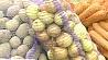 Могилевскую область принимает в эти выходные столичная ярмарка Щедрая осень Магілёўскую вобласць прымае ў гэтыя выхадныя сталічны кірмаш Шчодрая восень