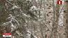 На территории столицы и Минской области прогнозируют дождь и мокрый снег  На тэрыторыі сталіцы і Мінскай вобласці прагназуюць дождж і мокры снег