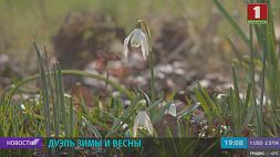 Настоящее противоборство между весной и зимой развернулось в Беларуси Сапраўднае супрацьборства паміж вясной і зімой разгарнулася ў Беларусі