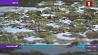 Природная аномалия в Пинске. Река Пина покрылась зеленым ковром Прыродная анамалія ў Пінску. Рака Піна пакрылася зялёным дываном