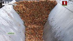 Белорусские аграрии начали заготовку кукурузного зерна Беларускія аграрыі пачалі нарыхтоўку кукурузнага зерня