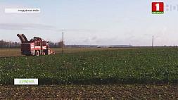 В Беларуси завершается заготовка сахарной свеклы