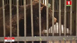 В столичном зоопарке проснулся медведь Тристан У сталічным заапарку прачнуўся мядзведзь Трыстан