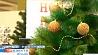 У католиков последний день Рождественского поста Сёння ў католікаў апошні дзень Каляднага посту