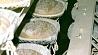 Ориентир белорусской науки - потребности экономики Арыенцір беларускай навукі - патрэбнасці эканомікі The Institute of Farming in Zhodino commended as one of the leading scientific institutions of Belarus