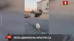 Житель Кипра придумал, как выгулять питомца, не выходя самому на улицу