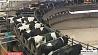 Беларусь в числе стран - лидеров по поставкам молочных продуктов на внешние рынки Беларусь сярод краін - лідараў па пастаўках малочных прадуктаў на знешнія рынкі Belarus among leaders for dairy product supply to foreign markets