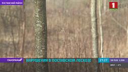 Комитет госконтроля выявил ряд нарушений в Поставском лесхозе Камітэт дзяржкантролю выявіў шэраг парушэнняў у Пастаўскім лясгасе