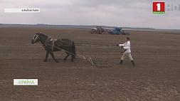 Аграрии Могилевской области пошли на эксперимент - высадили по несколько гектаров овса и ячменя Аграрыі Магілёўскай вобласці пайшлі на эксперымент - высадзілі па некалькі гектараў аўса і ячменю