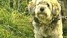 Выгуливать собак по правилам Выгульваць сабак па правілах
