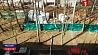 Сильный ветер в Беларуси повредил десятки зданий Моцны вецер у Беларусі пашкодзіў дзясяткі пабудоў