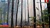 По факту пожара в чернобыльской зоне возбуждено уголовное дело У чэрвені беларусы змогуць аплаціць камунальныя паслугі з дапамогай QR-кода