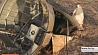 Установлена личность исполнителя египетского теракта на борту российского самолета A321  Высветленая асоба выканаўца егіпецкага тэракта на борце расійскага самалёта A321