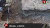 В Бобруйске во дворе частного дома обнаружены останки человека