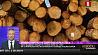 ЕБРР выделит кредит в 15 миллионов евро на 7 лет на строительство лесопильного завода под Мозырем