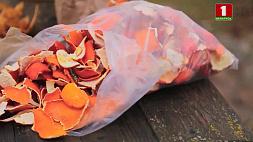 Яичная скорлупа, луковая шелуха и картофельные очистки - ценный дачный запас