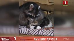 Кошка Шизик, собака Дана и енот Марк. Безграничная любовь