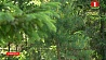 В Беларуси во всех 16-ти районах Брестской области введен запрет на посещение лесов  У Беларусі ва ўсіх 16-ці раёнах Брэсцкай вобласці ўведзена забарона на наведванне лясоў