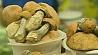 Отравление грибами - тема  актуальная Атручэнне грыбамі - тэма актуальная