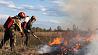 За сутки в экосистемах Минского района потушили 8 пожаров