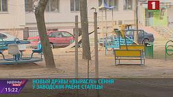 В Заводском районе Минска высадили сосны и липы  У Заводскім раёне Мінска высадзілі хвоі і ліпы