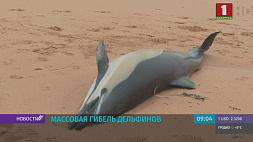 На побережье Намибии обнаружили почти 90 мертвых дельфинов На ўзбярэжжы Намібіі выявілі амаль 90 мёртвых дэльфінаў