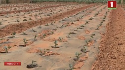 Два миллиона жителей китайской провинции Юньнань остались без воды