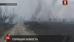 Три человека погибли из-за природных пожаров с начала года в Беларуси