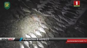 На реке Припять в Калинковичском районе госинспекторы задержали троих браконьеров