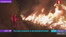 Лесные пожары охватили юг Англии
